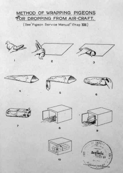 Method-of-wrapping-carrier-pigeons